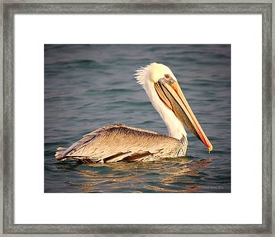 Brown Pelican Floating Framed Print