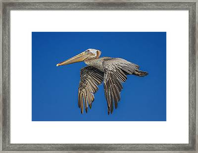 On My Way To See You Framed Print by Leslie Reagan -  Joy To The Wild Photos
