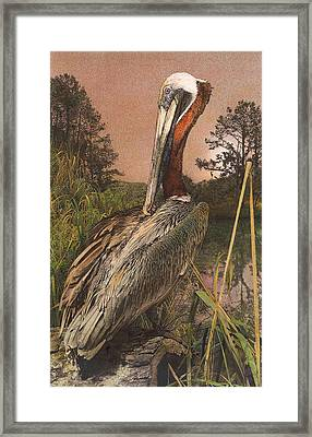 Framed Print featuring the painting Brown Pelican by John Dyess