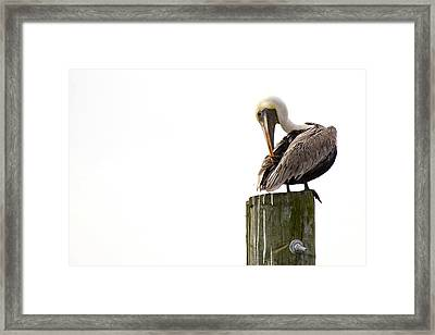 Brown Pelican On Piling Framed Print by Bob Decker