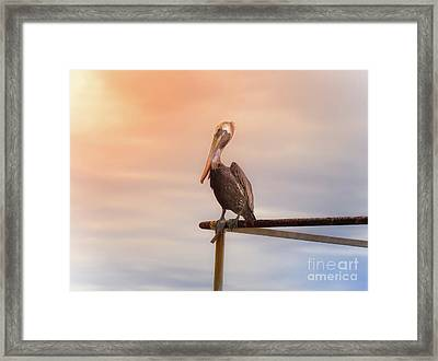 Framed Print featuring the photograph Brown Pelican Sunset by Robert Frederick