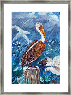 Brown Pelican With Gulls Framed Print by Doris Blessington