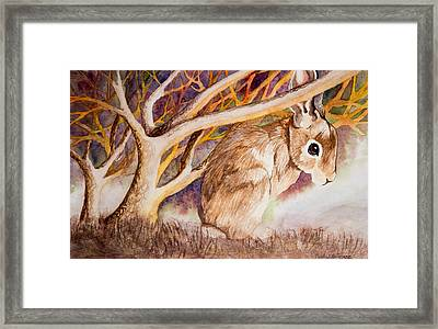 Brown Rabbit Framed Print