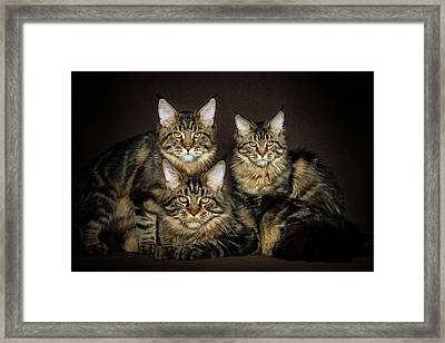 Brown Siblings Framed Print