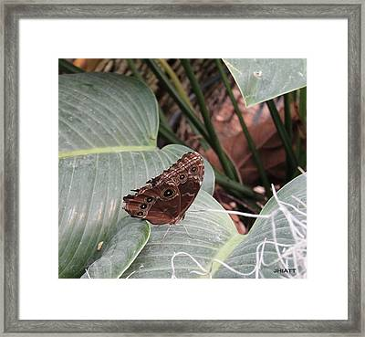 Brown Sugar Framed Print