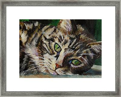 Brown Tabby Cat Framed Print