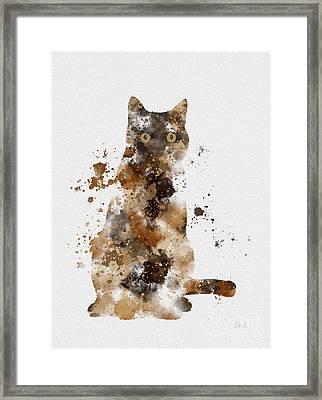 Brown Tabby Framed Print
