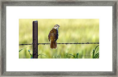 Brown Thrasher Framed Print by Don Durfee