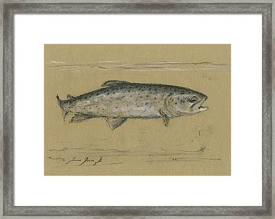 Brown Trout Framed Print by Juan Bosco
