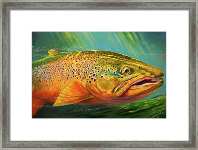 Brown Trout Portrait  Framed Print by Yusniel Santos