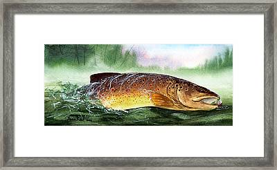 Brown Trout Taking A Fly Framed Print by Sean Seal