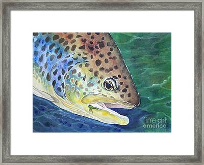 Brown Trout Framed Print by Tracey Hunnewell