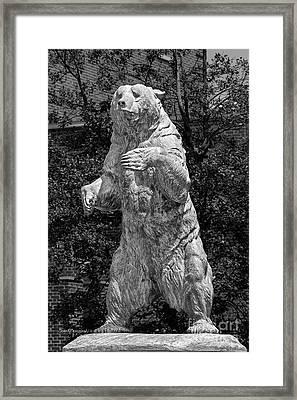 Brown University Bear Framed Print