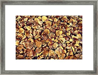 Framed Print featuring the photograph Browning Leaves by Glenn McCarthy Art and Photography