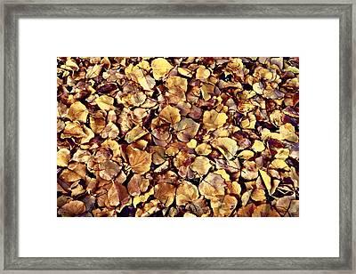 Browning Leaves Framed Print