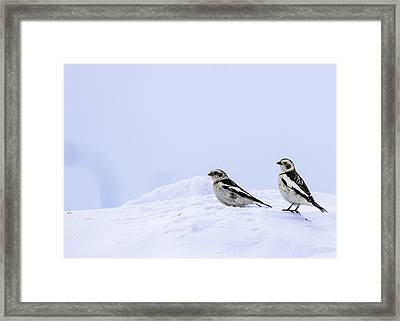 Bruand Des Neiges Framed Print