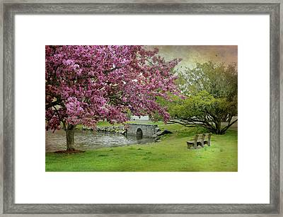 Bruce Park Cherry Blossoms Framed Print by Diana Angstadt