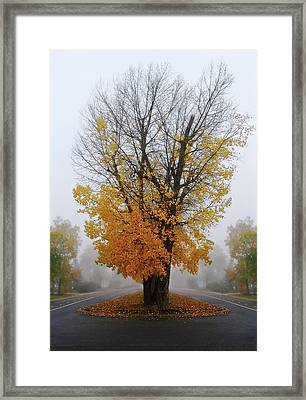 Brume Framed Print by Maggie Terlecki