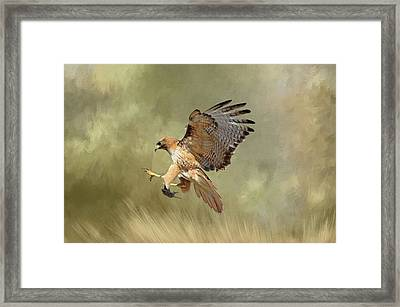 Brunch Framed Print by Donna Kennedy