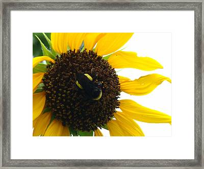 Brunch Framed Print by Terry Anderson