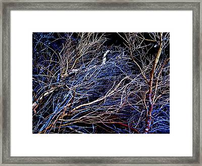 Brush Pile 2 Framed Print