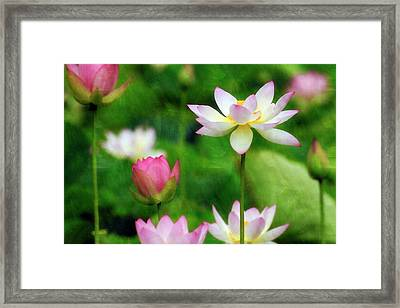 Framed Print featuring the photograph Brushed Lotus by Edward Kreis