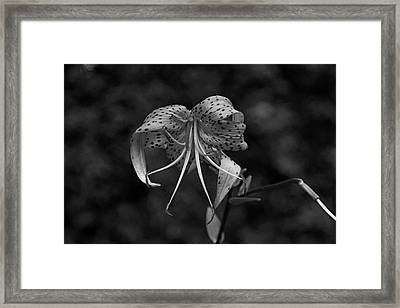 Brutally Beautiful Framed Print