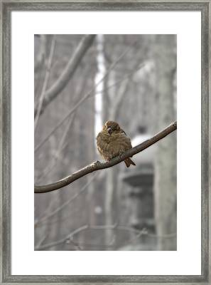 Bryant Park Bird Nyc Framed Print by Henri Irizarri