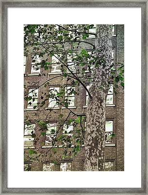 Bryant Park Framed Print by JAMART Photography