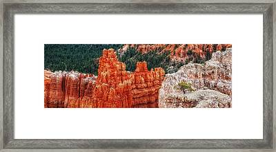 Bryce Canyon - Lone Tree Framed Print