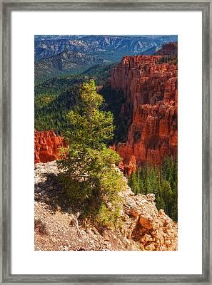 Bryce Canyon - Pine Tree Framed Print by Bob Coates