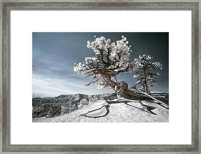 Bryce Canyon Infrared Tree Framed Print