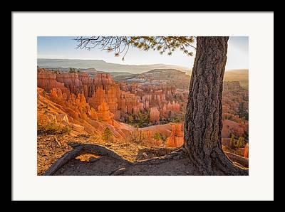 Ponderosa Pine Framed Prints