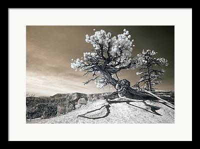 Tree Roots Framed Prints
