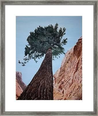 Bryce Pine Framed Print