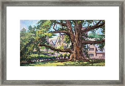 Bryn Mawr Tree Wide Reach Framed Print