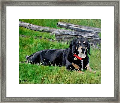Bubba Framed Print by Anita Carden