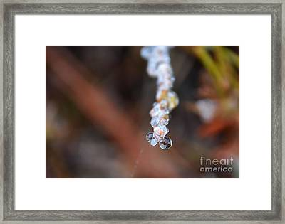Bubble Eyed Water Drops- Loganville Georgia Framed Print