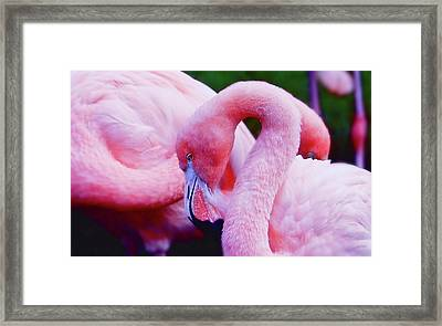 Framed Print featuring the photograph Bubble Gum Pink by Elaine Manley