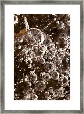 Bubbles Framed Print by Anne Gilbert