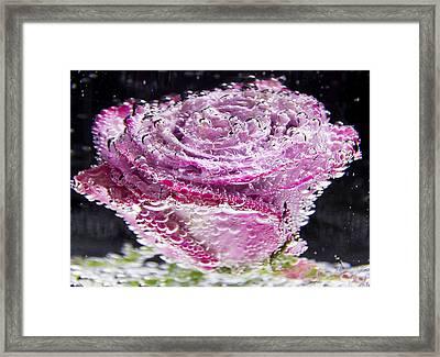 Bubbling Pink Rose Framed Print