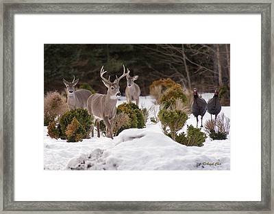 Framed Print featuring the photograph Buck And Turkey by Angel Cher