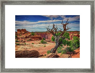 Buck Canyon Overlook Framed Print by Rick Berk