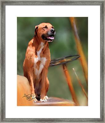Buck Framed Print by Colleen Taylor