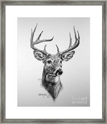 Buck Deer Framed Print by Roy Anthony Kaelin