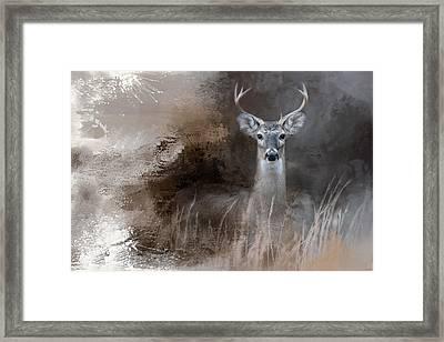 Buck In The Shadows Framed Print