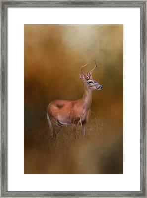 Buck In The Woods Framed Print
