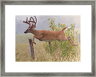 Buck Jumping Fence Framed Print by Steve Carpenter