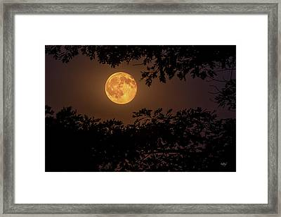 Framed Print featuring the photograph Buck Moon 2016 by Everet Regal
