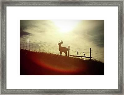 Buck Silhouette Framed Print by Todd Klassy